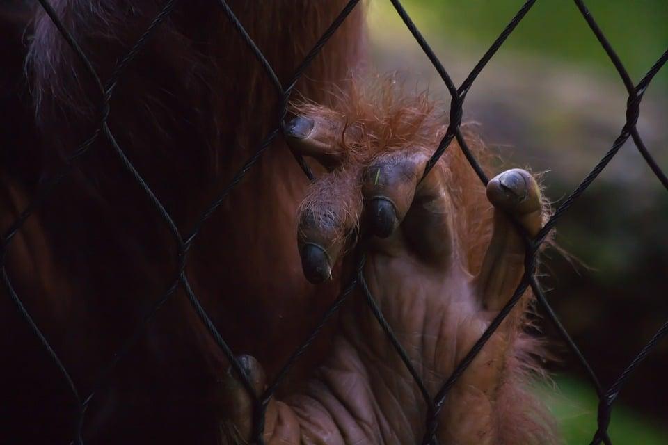 Covid et situation des animaux dans les cirques et les zoos :  privilégier l'amont à l'aval !