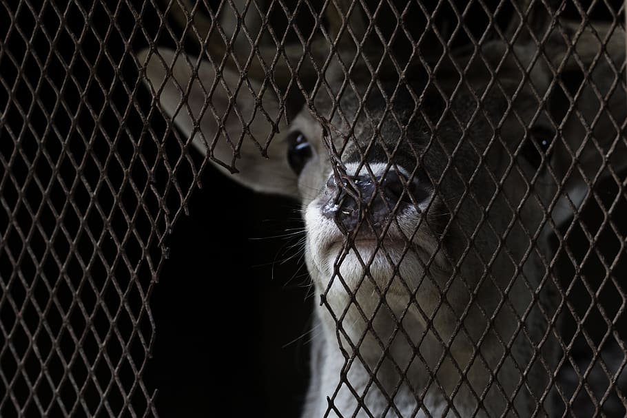 Encore plus de souffrance pour les animaux, victimes collatérales du Covid-19