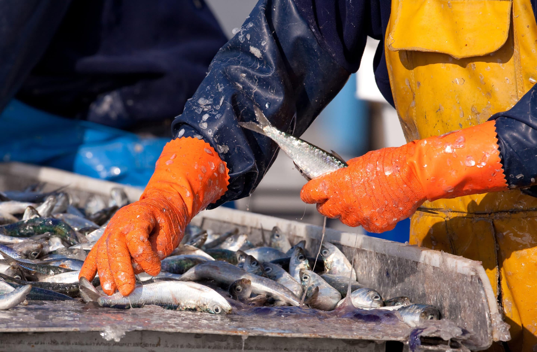 Plan « West Med » : le Rassemblement National est aux côtés des pêcheurs d'Occitanie