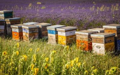 Etiquetage du miel : du retard à l'envol!